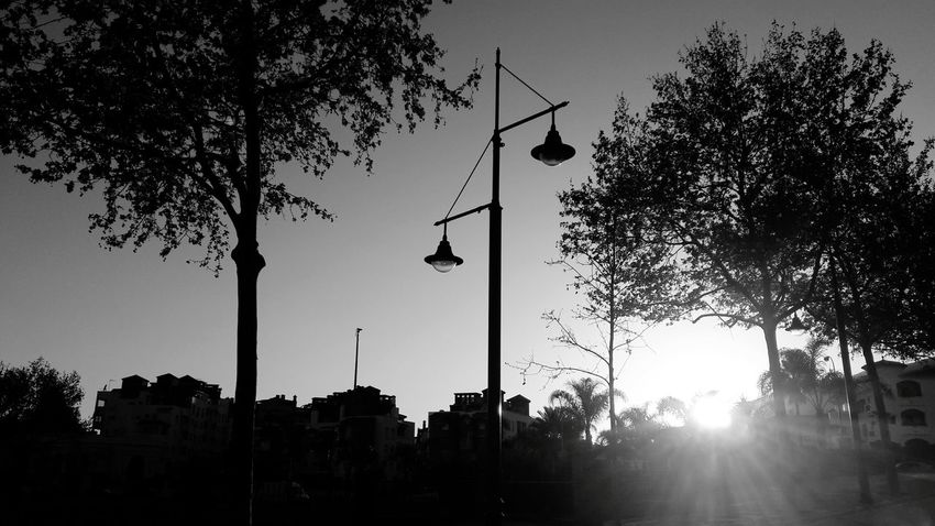 Black And White Arroyo De La Miel Spain🇪🇸 Nature