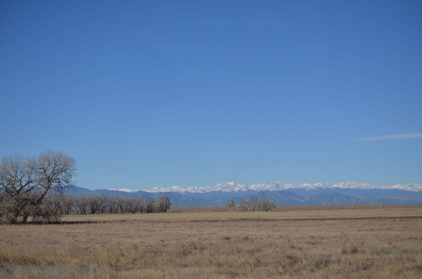Colorado Colorado Photography Rocky Mountain Arsenal National Wildlife Refuge Bare Tree Beauty In Nature Blue Clear Sky Day Field Landscape Mountain Nature No People Outdoors Rocky Mountains Scenics Sky Tranquil Scene Tranquility Tree