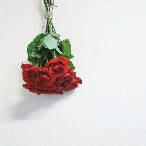 _ 건조시키기 위해 한쪽 벽에 걸어둔 예쁜 마음 담긴 장미 열송이 드라이플라워 로 만들어서 소중히 오래 간직할게요 꽃 일상 데일리 선물 감동 rose present flower interior daily thanks