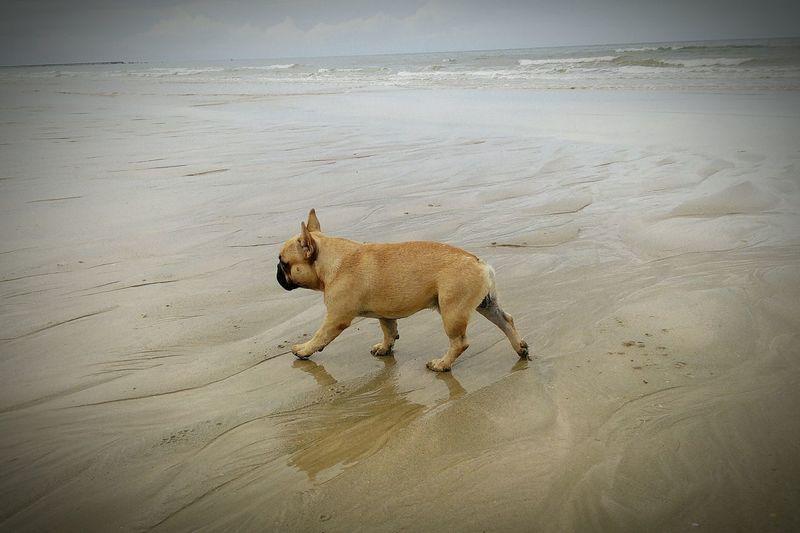 First Eyeem Photo Sea Dog Walking Dog