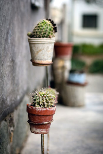 Close-Up Of Potted Cactus Plant On Stand