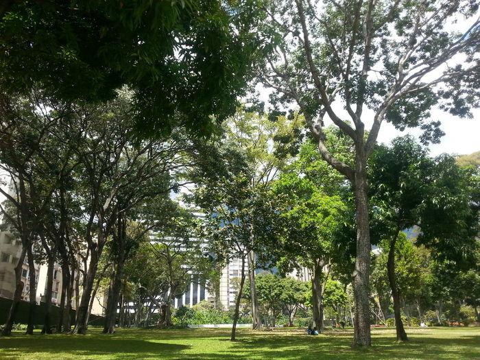 Trees Caracas
