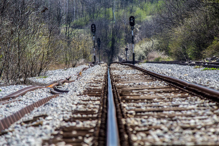 Surface level of railroad tracks in forest