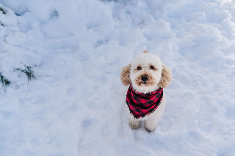 Portrait of a dog on snow