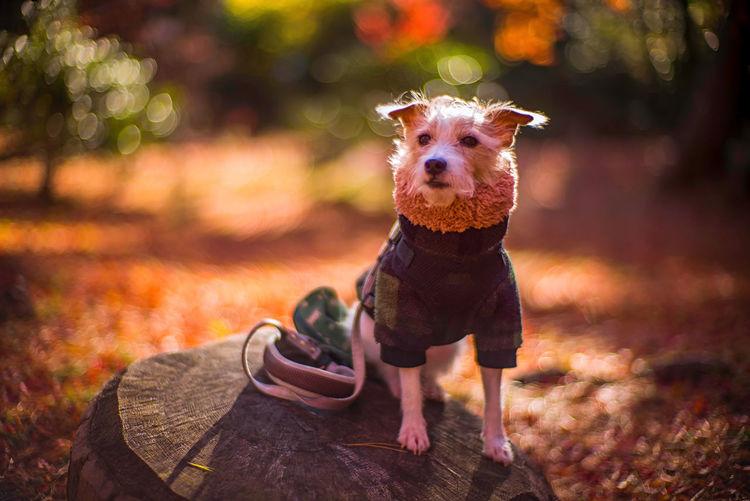 Portrait of dog wearing mask on land during autumn