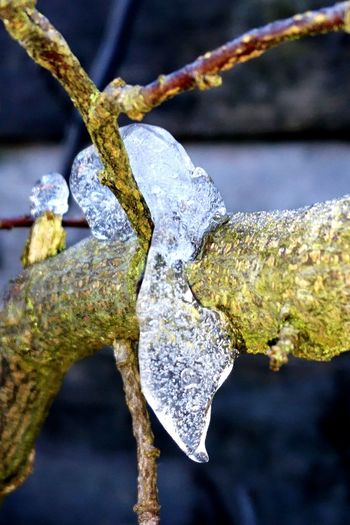 Ice XPERIA Macro Frozen Close-up Tree Branch No People Outdoors Day Nature Beauty In Nature EyeEmNewHere