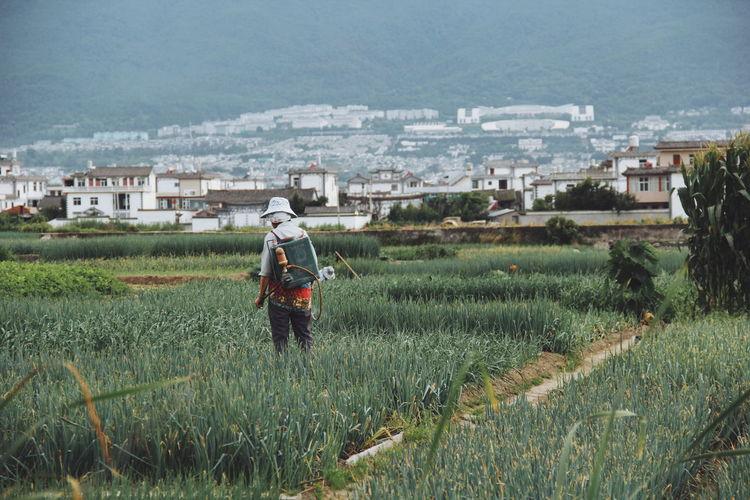 Rear view of farmer spraying pesticide on crop
