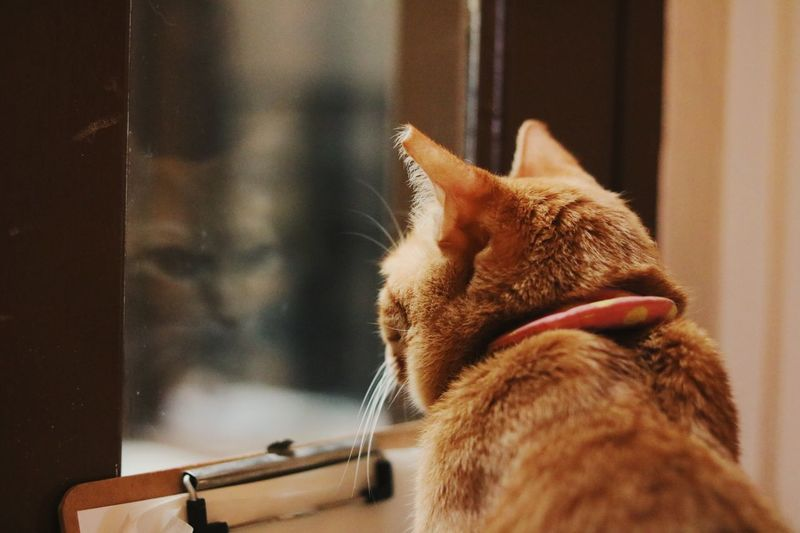 Self reflection? Or self contemplation? Domestic Cat Pets Domestic Animals One Animal Animal Themes Feline Mammal Cat Indoors  No People Focus On Foreground Close-up Ginger Cat Day EyeEmNewHere Singapore Tranquility Pet Portraits