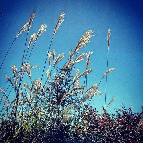 Get the Weekend started right... Freshair Fridays Beautiful Autumn Nature