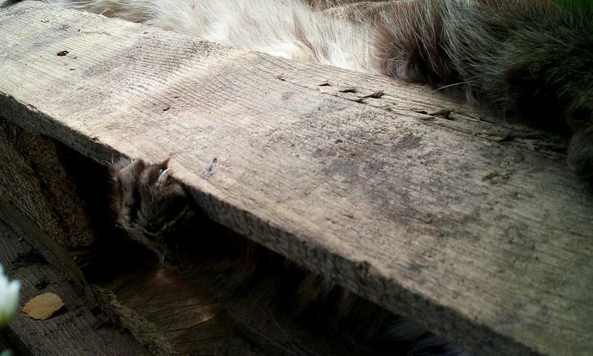 Cat Animal Themes Domestic Cat Cat Feets Wood - Material Backgrounds Full Frame Textured  High Angle View Close-up