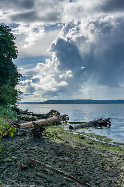Dramatic clouds hover over the Puget Sound. Beach Beauty In Nature Cloud - Sky Dash Point Day Driftwood Horizon Horizon Over Water Land Nature No People Non-urban Scene Outdoors Plant Scenics - Nature Sea Sky Tranquil Scene Tranquility Tree Water Wood