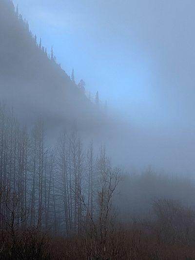 blue mist......
