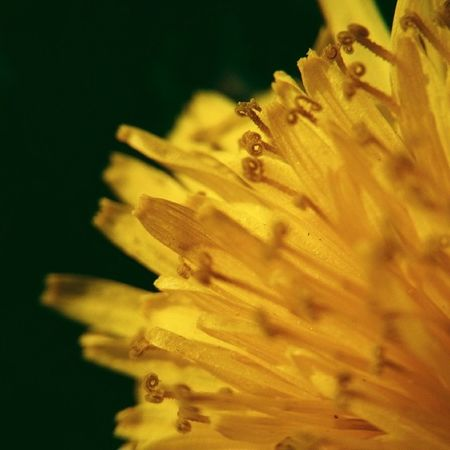 Spring Flower Yellow Sowthistle life existence colors mobilnytydzien vscocam vscopoland