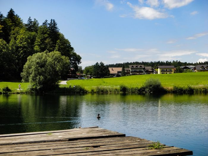 Sunny day at the lake Slovenia Green Lake Green Grass Nature Photography Great Outdoors - 2018 Eyeem Awards Duck Swimming Duck Lakeside Pier Lakeshore Sunny Day Trees Water Tree Plant Sky Built Structure Nature Architecture Lake Reflection Day Green Color Scenics - Nature No People Beauty In Nature Outdoors Tranquility