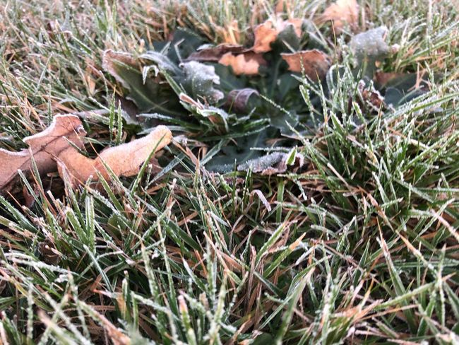 Frost Plant Growth Nature Field Land Day No People Grass Beauty In Nature Green Color Tranquility Outdoors Fragility Leaf Plant Part Vulnerability