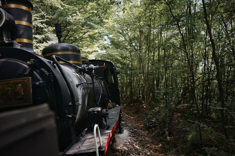 Steam train in forest