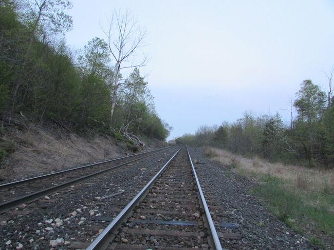 Day Horizon Line Nature No People Outdoors Rail Transportation Railroad Track Train Tracks Transportation Tree