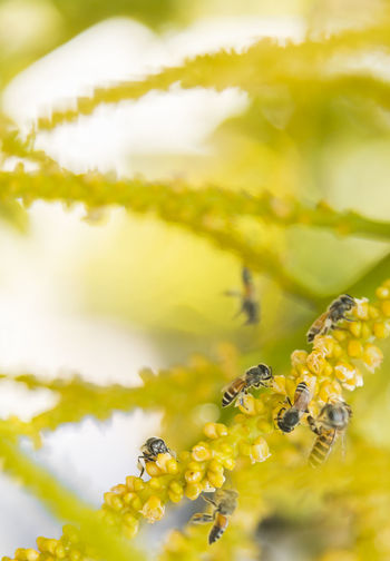 bee and plant Animal Animal Themes Animal Wildlife Animals In The Wild Beauty In Nature Bee Close-up Flower Flower Head Flowering Plant Fragility Freshness Growth Insect Invertebrate No People One Animal Petal Plant Pollination Selective Focus Vulnerability  Yellow