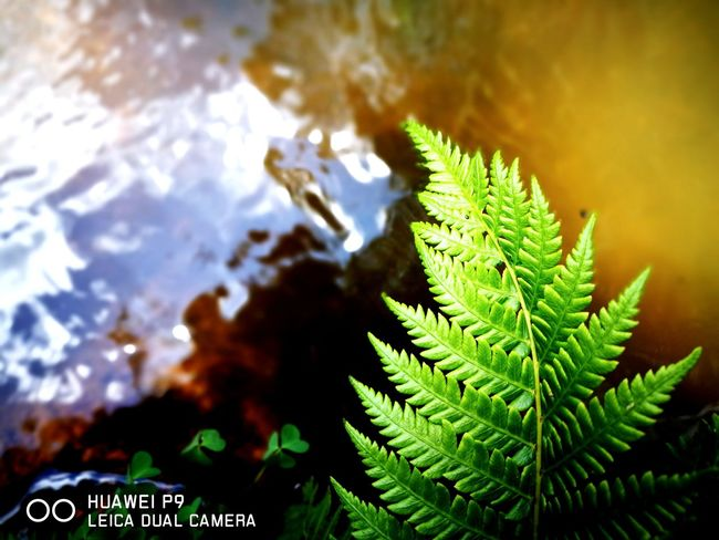 Nature Green Color Pinaceae Day Growth Plant No People Pine Tree Outdoors Beauty In Nature Leaf Close-up Water Freshness Tree Sky