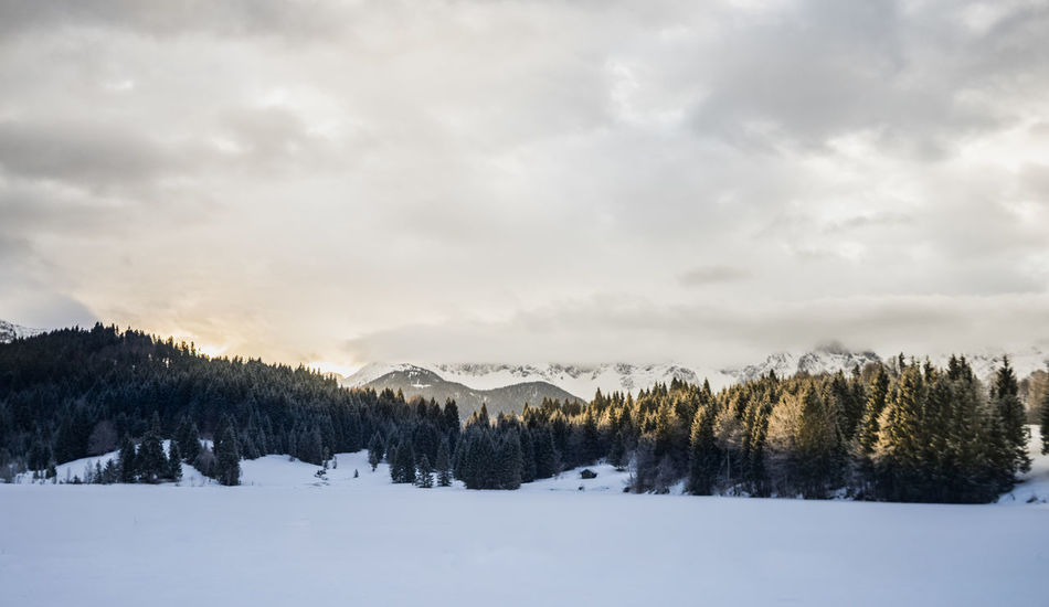 Beauty In Nature Cloud - Sky Cold Temperature Covering Environment Land Landscape Mountain Nature No People Pine Tree Plant Scenics - Nature Sky Snow Tranquil Scene Tranquility Tree White Color Winter