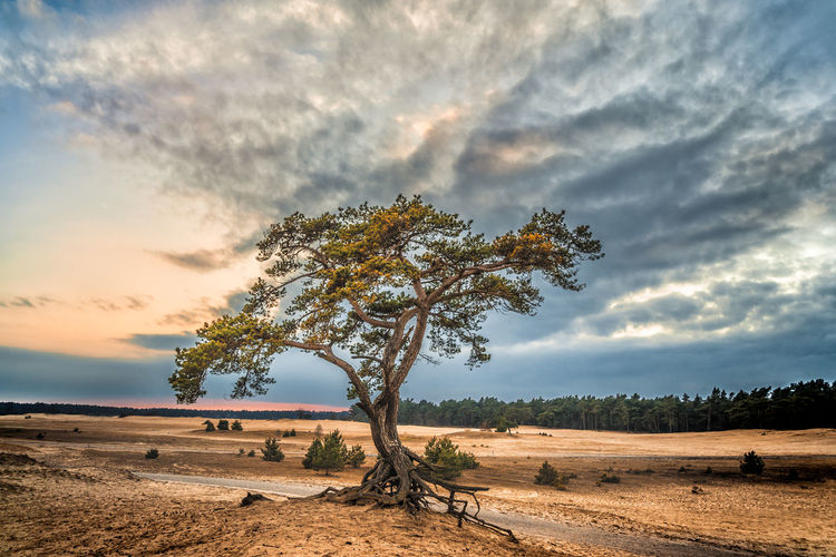 Veluwe Beauty In Nature Beekhuizerzand Cloud - Sky Day Landscape Lone Nature No People Outdoors Scenics Sky Tranquil Scene Tranquility Tree