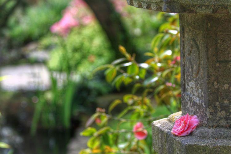 Leverkusen Japanese Garden