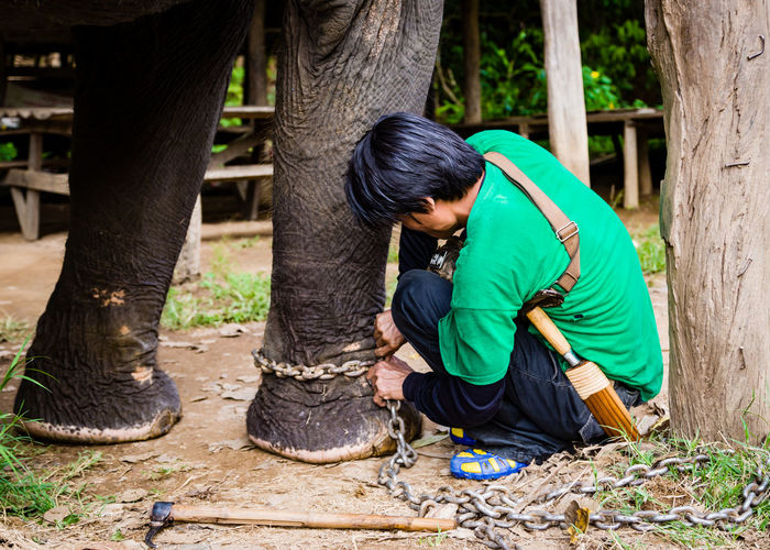 A mahout chaining his elephant after a trekking tour. Animal Cruelty ASIA Asian Elephants Captive Animal Chains Elephant Elephant Camp Elephant Conservation Elephant Trekking Legs Mahout Photojournalism Thailand The Photojournalist - 2016 EyeEm Awards