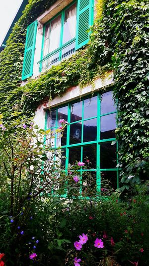Claude Monet's Home Windows Leaves Flowers,Plants & Garden Beauty In Nature Beautiful Colours Reflections Eye4photography  EyeEm Gallery The Week On EyeEm