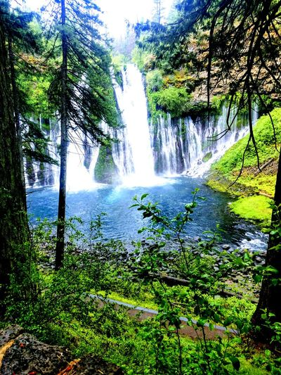 One of Mother Nature's Wonders Gorgeous Waterfall Tree Water Forest Motion Sky Green Color