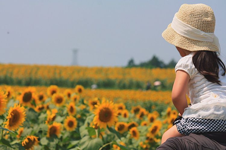 Man Carrying Daughter On Shoulders At Sunflower Field