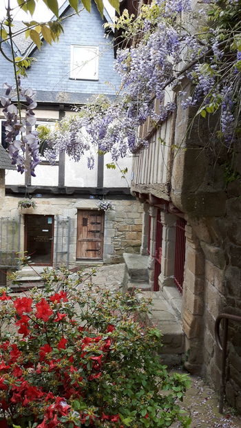 Typical street Rue typique Flower Red Flowers 🌺 Violet Flowers Street Outdoors Streetphotography No People Architecture saint goustan Auray Morbihan Bretagne France