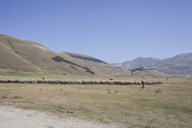 Beauty In Nature Castelluccio Clear Sky Day Italy Landscape Mountain Mountain Range Nature Norcia One Person Outdoors People Rural Scene Sky Travel Destinations