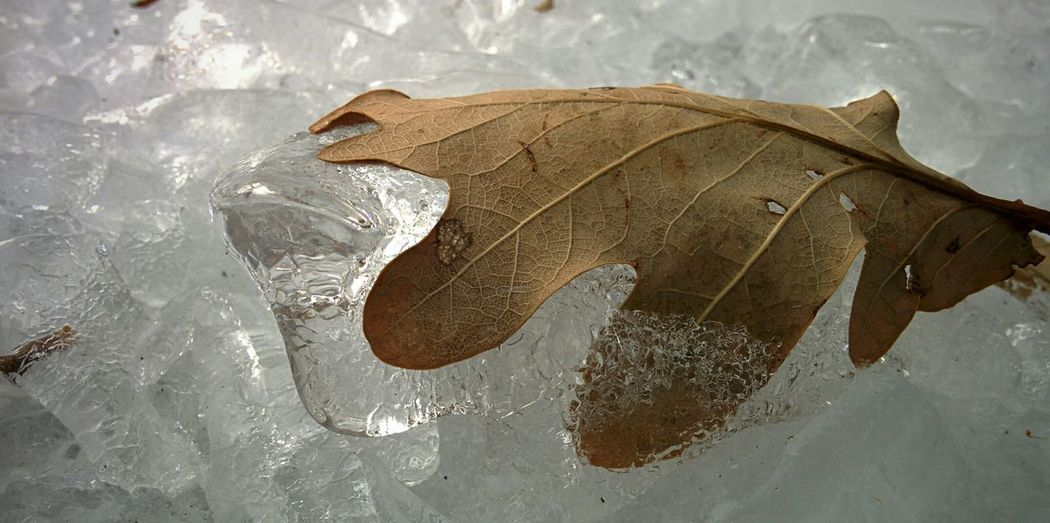 Ice Frozen Getting In Touch EyeEm Nature Lover Cold Weather Getting Inspired Wintertime Leaf Deepfreeze