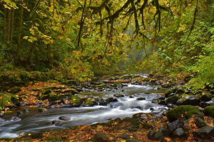 Autumn Beauty In Nature Day Forest Growth Landscape Long Exposure Motion Nature No People Outdoors Plant River Scenics Tranquil Scene Tranquility Tree Water Waterfall WoodLand EyeEmNewHere