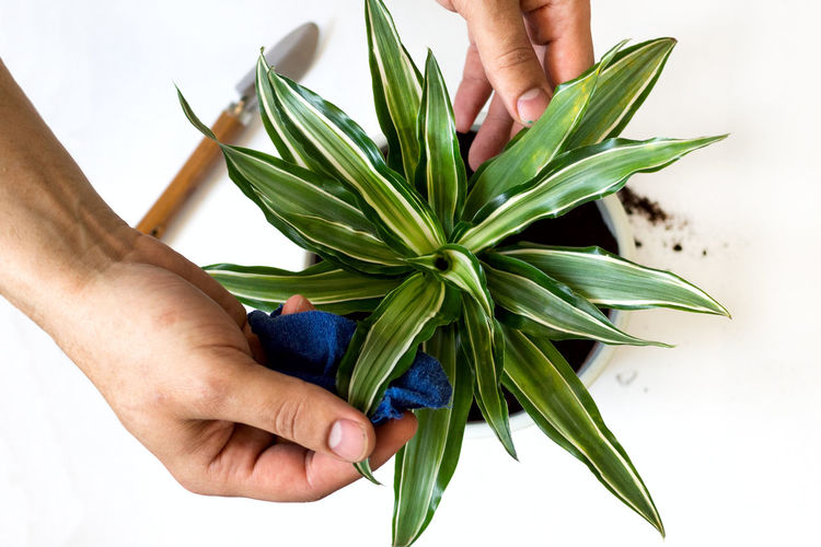 Midsection of person holding plant