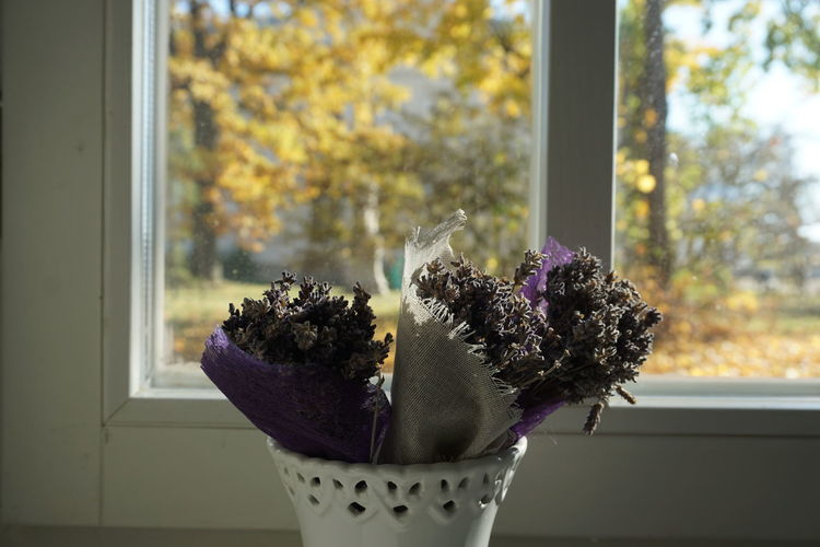 autumn in Trakai#58 Plant Window Nature Glass - Material Flower Day Focus On Foreground Flowering Plant No People Window Sill Close-up Indoors  Transparent Growth Freshness Potted Plant Beauty In Nature Container Vulnerability  Purple Flower Pot Flower Head Houseplant Flower Arrangement