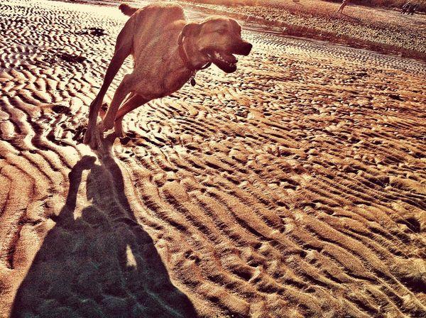Summer Dogs Dog Sunshine Dog Love 43 Golden Moments
