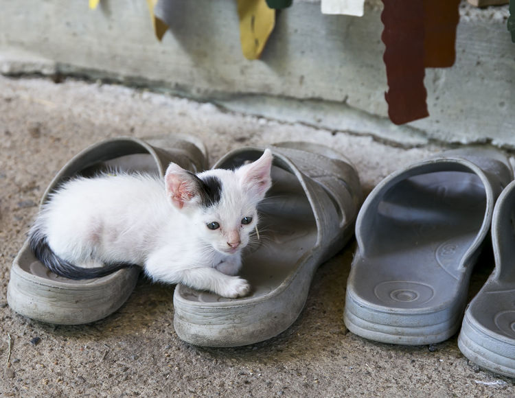 Black and White Newborn Baby Kitten on the Slippers Kitty Natural Light Portrait Newborn Cat Slippers Animal Themes Baby Cat Black And White Cat Day Domestic Animals Domestic Cat Feline Kitten Mammal No People One Animal Outdooor Outdoors Pets Portrait Sitting