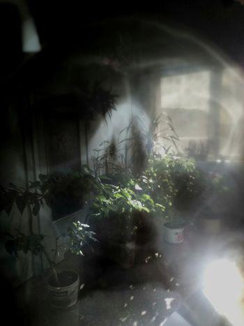 Plant Tree Hospital X-Ray