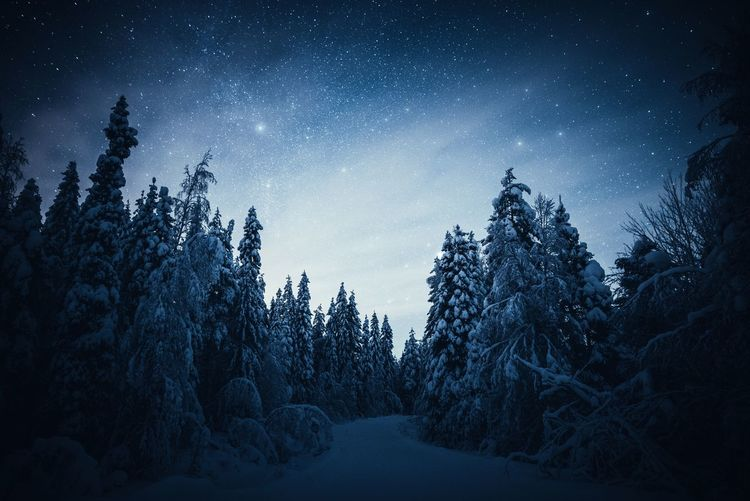 Frozen universe Tree Tranquil Scene Tranquility Beauty In Nature Sky Nature Snow Night Cold Temperature Winter No People Star - Space Astronomy Landscape Scenics Freshness Hello World Check This Out Hanging Out Outdoors Eye4photography  Nature_collection Nightphotography Blue Taking Photos