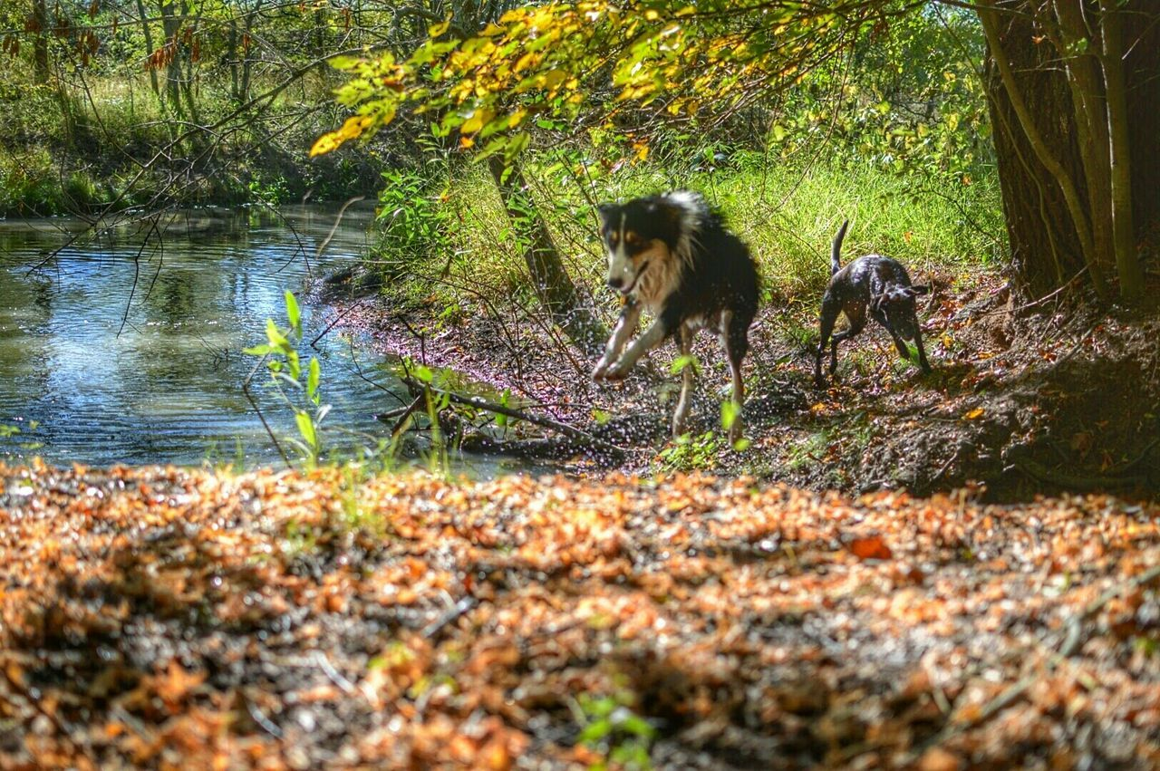 animal themes, tree, nature, day, dog, mammal, outdoors, plant, growth, domestic animals, one animal, pets, grass, forest, full length, no people, water