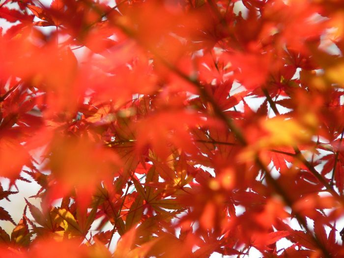 Low Angle View Of Orange Leaves On Tree During Autumn