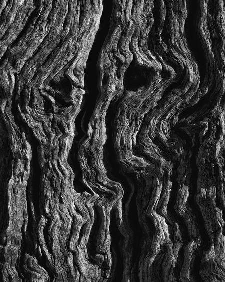 Dementor Tree