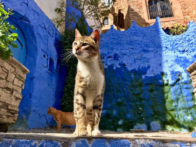 Cat in blue city Art And Craft No People Creativity Day Pets Sunlight Outdoors