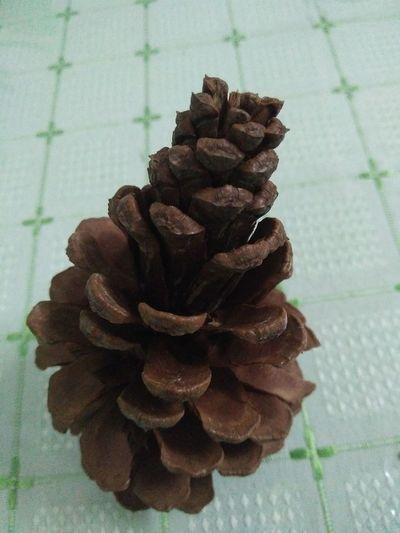 Indoors  Close-up Nature Pine Cones Bronze Colour Pine Cone Close Up Pinecones Beauty In Nature Beautiful