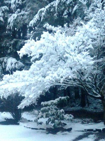 Winters icy grasp First Eyeem Photo EyeEmNewHere EyeEmNewHere
