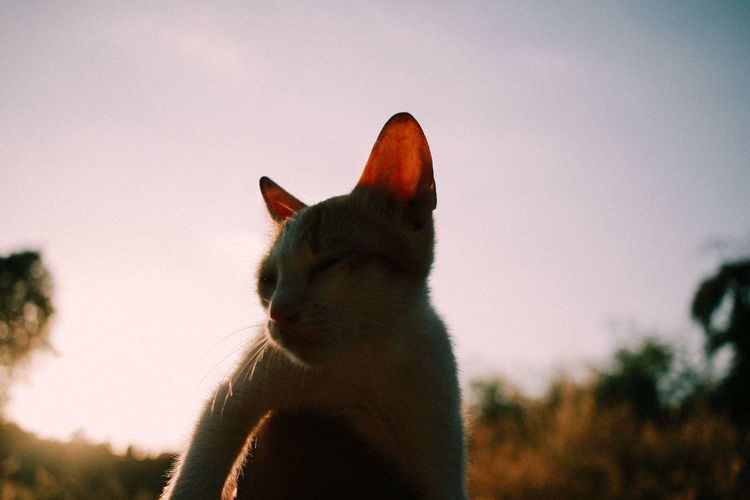 Close-up of a cat looking away against sky