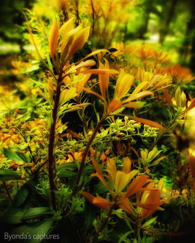#byondascaptures #photography #amateurshot #amateurphotography #amateurphotographer Plant Plant Life Blooming Leaf Vein Leaf