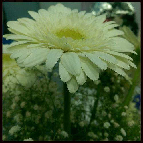 Flowers Yellow Flower Htconem8 HTC ,