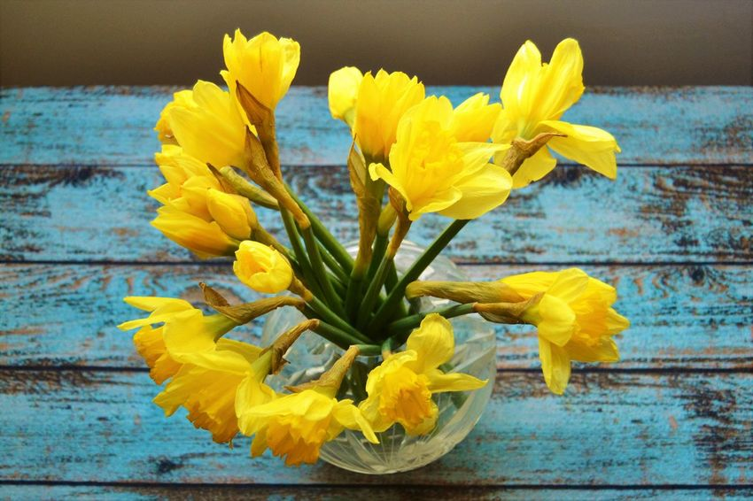 fresh narcissus in a vase on a blue table, smells like in spring, Beauty In Nature Blue Table Close-up Day Decoration Flower Flower Head Flowers In A Vase Fragility Freshness Freshness Narcissus Narcissus Flowers Narcissus On The Table Narcissus Poeticus Narcissus Pseudonarcissus Nature No People Outdoors Petal Plant Spring Water Yellow Yellow And Blue